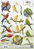 3D Knipvel - Amy Design - Animal Medley - Tropical Parrots